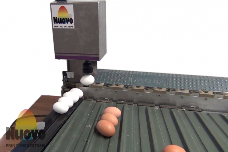 Nuovo Egg Printing and Egg Stamping Systems - Easy Stamp Stempelaar SOR op Sorteermachine Invoertafel