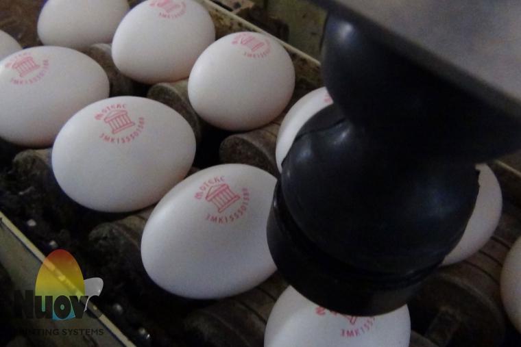 Nuovo Egg Printing and Egg Stamping Systems - Selladora Automatica Easy Stamp SOR en Mesa de Entrada de Clasificadora