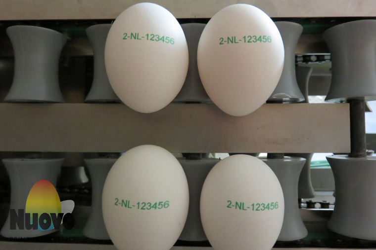 Nuovo Egg Printing and Egg Stamping Systems - Egg Jet Printer SOR on Grader Infeed Table