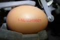 Nuovo Egg Printing and Egg Stamping Systems - Egg Jet Printer R1 on Mopack