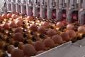 Nuovo Egg Printing and Egg Stamping Systems - Eierbeschriftungsgerät Egg Jet SOR auf Zufuhrtisch der Sortiermaschine