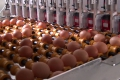 Nuovo Egg Printing and Egg Stamping Systems - Impresora Egg Jet SOR en la banda de rodillos de clasificadora