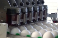Nuovo Egg Printing and Egg Stamping Systems - Egg Jet Printer R6 op Mopack 150