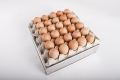 Nuovo Egg Printing and Egg Stamping Systems - Selladora Easy Stamp EMS2x3