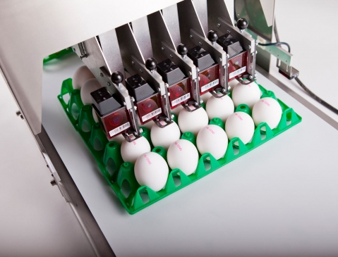 Nuovo Egg Printing and Egg Stamping Systems - BAN5 Shoot 1