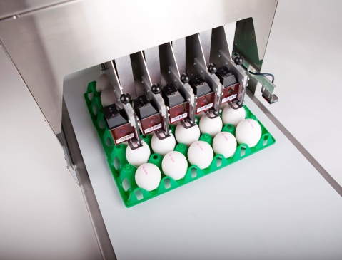 Nuovo Egg Printing and Egg Stamping Systems - BAN5 Shoot 2