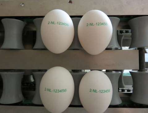 Nuovo Egg Printing and Egg Stamping Systems